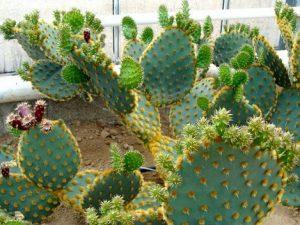 Sorties Familiales - Cactuseraie